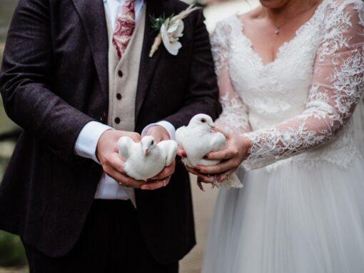 Bruidsduiven 2020